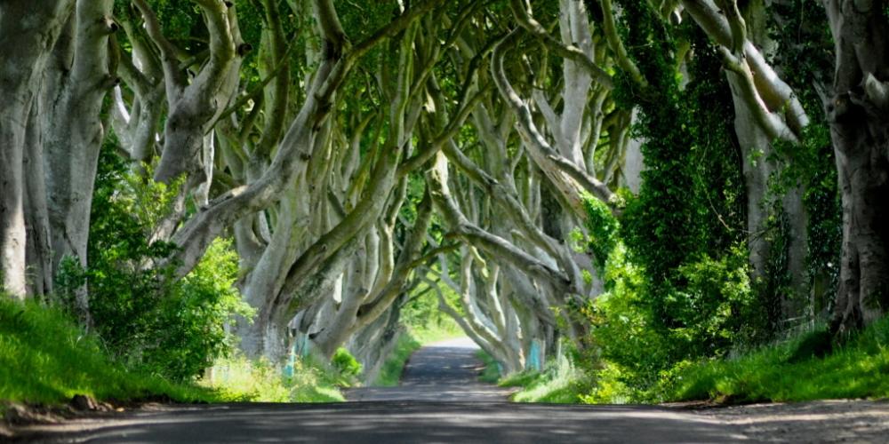 Irish film industry in the spotlight